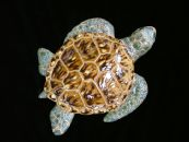 "12"" CERAMIC SEA TURTLE"